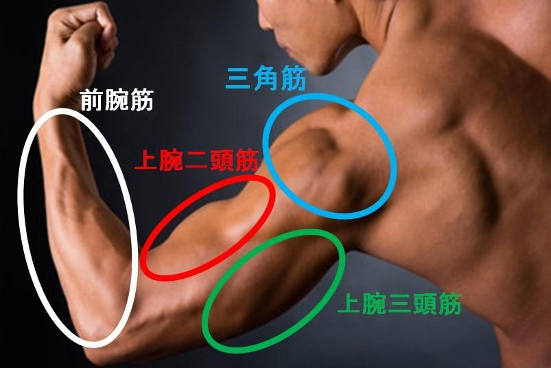 腕の筋肉の種類