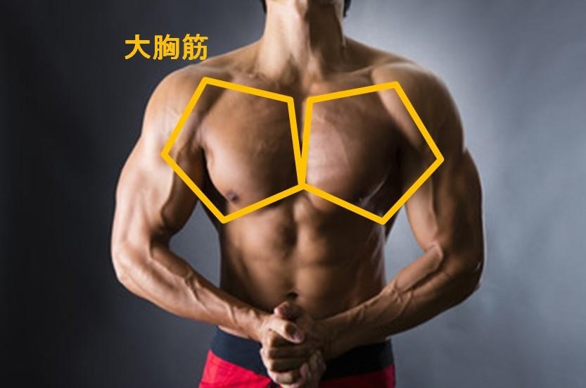 胸の筋肉(大胸筋)