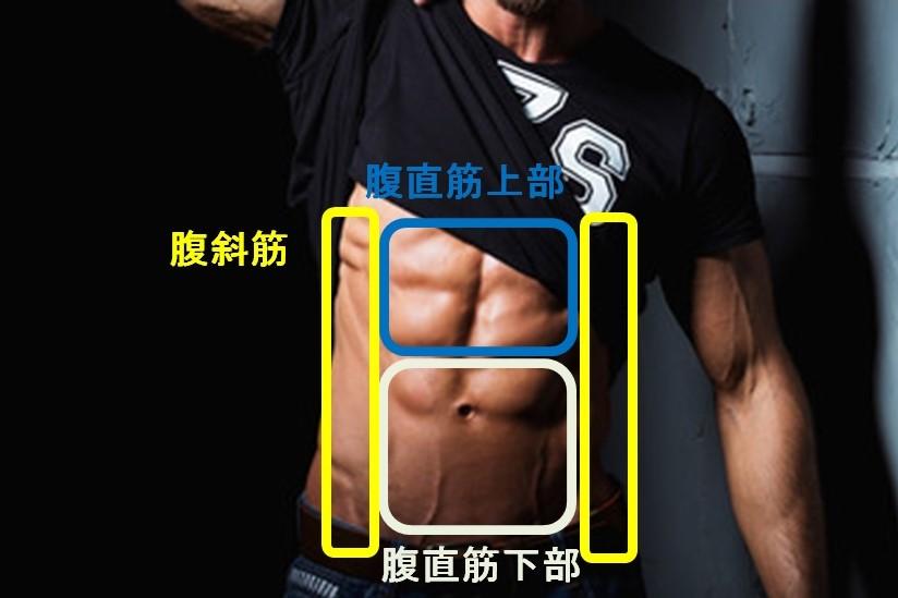 腹の筋肉の種類