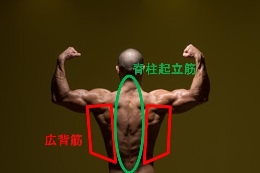 背中の筋肉の種類