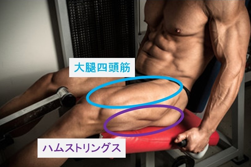太ももの筋肉の種類