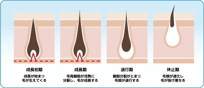 メンズ医療脱毛 毛周期